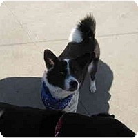 Adopt A Pet :: Maxx - Wahoo, NE