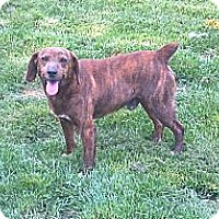 Adopt A Pet :: Specks - Hazard, KY