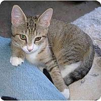 Adopt A Pet :: Jodie - Colmar, PA
