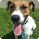 Adopt A Pet :: Jake-Foster Needed Urgent