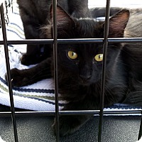 Adopt A Pet :: Rose and River - Chandler, AZ