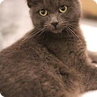 Adopt A Pet :: Audrey - Sacramento, CA