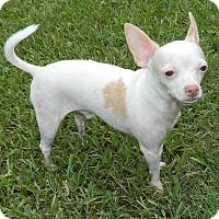 Adopt A Pet :: Casper - Umatilla, FL