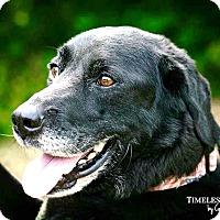 Adopt A Pet :: Hamilton - RESCUED! - Zanesville, OH