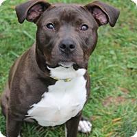 Adopt A Pet :: Zena - Waldorf, MD