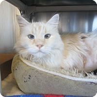 Adopt A Pet :: KandyKorn - Ridgway, CO