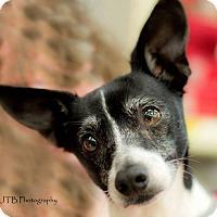 Adopt A Pet :: SIMONE - Terra Ceia, FL