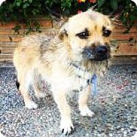 Adopt A Pet :: Gizmo - Santa Cruz, CA