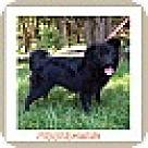 Adopt A Pet :: Puppup (POM DC)