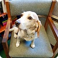 Adopt A Pet :: Luna - Hillsboro, IL