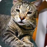 Adopt A Pet :: Strudel - Casa Grande, AZ