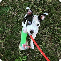 Adopt A Pet :: Emmaline - Chicago, IL