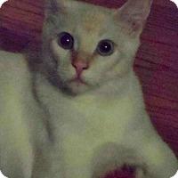 Adopt A Pet :: Misha - Los Angeles, CA