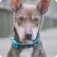 Adopt A Pet :: Churchill - Webster, TX