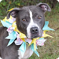 Adopt A Pet :: Molly Mae - Denver, CO