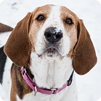 Adopt A Pet :: Makenna - Lockport, NY