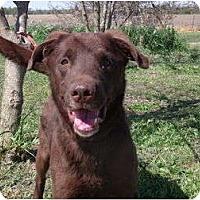 Adopt A Pet :: Zane - Lewisville, IN