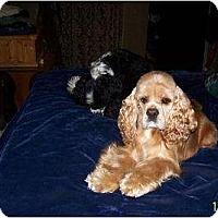 Adopt A Pet :: BabyGirl - Tacoma, WA