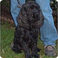 Adopt A Pet :: George - Tacoma, WA