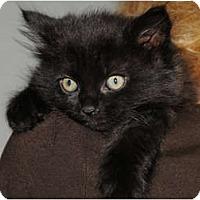 Adopt A Pet :: Kuro - Monroe, GA