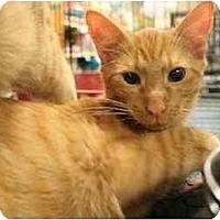 Adopt A Pet :: Neville - Orlando, FL