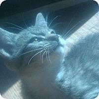 Adopt A Pet :: Annie - Harriman, NY, NY