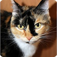 Adopt A Pet :: Ginger - Farmingdale, NY