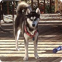 Adopt A Pet :: Miki - Staunton, VA