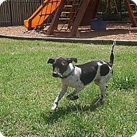 Adopt A Pet :: Sydney - Homewood, AL