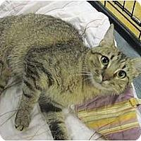 Adopt A Pet :: Petra - The Colony, TX