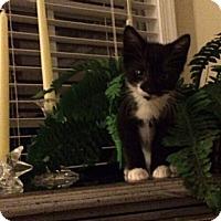 Adopt A Pet :: Emma - Reston, VA