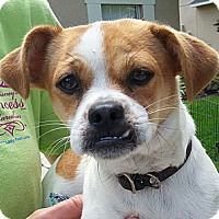 Adopt A Pet :: Franny - Orlando, FL