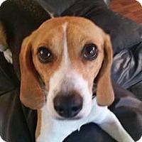 Adopt A Pet :: Nellie - Gig Harbor, WA
