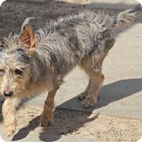 Adopt A Pet :: Ferndale - Meet her! - Norwalk, CT