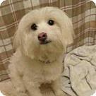 Adopt A Pet :: Lilac - Adoption Pending