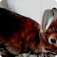 Adopt A Pet :: Geist - Conshohocken, PA