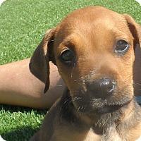 Adopt A Pet :: Lizzie - San Diego, CA