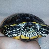 Adopt A Pet :: Parker - Markham, ON