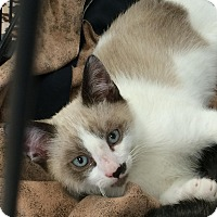 Adopt A Pet :: Quinn - San Fernando Valley, CA