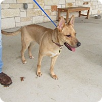 Adopt A Pet :: Princess - Bedford, TX