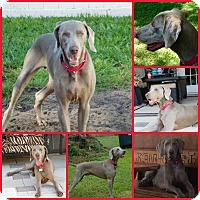 Adopt A Pet :: ASA - Davenport, FL