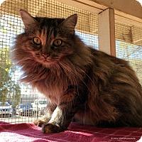 Adopt A Pet :: Ida - Tucson, AZ