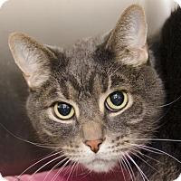 Adopt A Pet :: Stewie - Adrian, MI