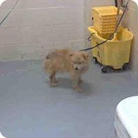 Adopt A Pet :: BUSTER - Conroe, TX