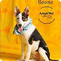 Adopt A Pet :: Boone - Topeka, KS