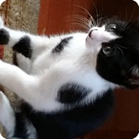 Adopt A Pet :: Tom Collins - Orange, CA