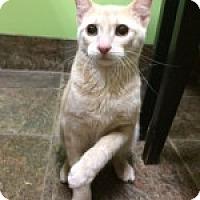 Adopt A Pet :: Cinnabon - McHenry, IL