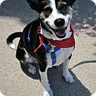 Adopt A Pet :: Boise