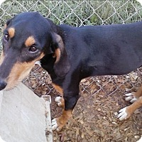 Adopt A Pet :: Michele - Staunton, VA