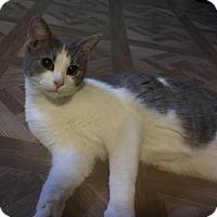 Adopt A Pet :: Alexia - Jerseyville, IL
